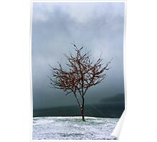 Red Berry Tree During a Snow Storm Poster