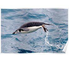 Swimming Penguin - Antarctica Poster