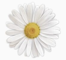 white shasta daisy flower floral sticker by wasootch