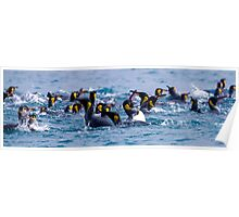 Swimming King Penguins - South Georgia Poster