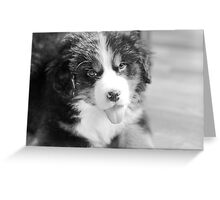 oh little berner pup. Greeting Card