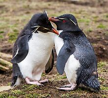 Rockhopper Penguin Couple - Falkland Islands by Kellie Netherwood