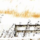 Fence in the Snow by virginian