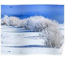 Frozen bushes--distant bison Poster