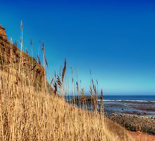 Whitby Coast by Stephen Smith