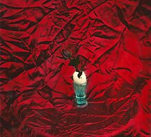 Death of a Rose by Rifo Dobra