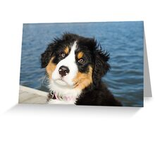 Bernese Mountain Dogs rock Greeting Card