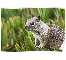 Wildlife in San Diego California Poster