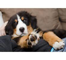 paws. Photographic Print