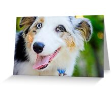 Australian Shepard is happy. Greeting Card