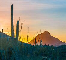 Desert Colors by Barbara Manis