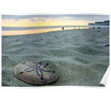Sand Dollar On The Beach Poster