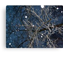 Looking Up In The Snow Into The Branches Canvas Print
