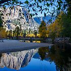 Autumn in Yosemite Park  by Nicole  Markmann Nelson