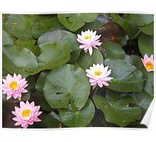 Waterlily quintet Poster