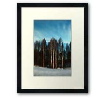 Birch Trees Lensbaby Style Framed Print