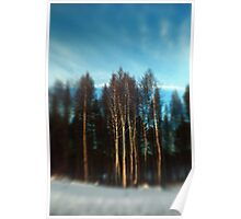 Birch Trees Lensbaby Style Poster