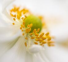 Anemone dreams by Celeste Mookherjee
