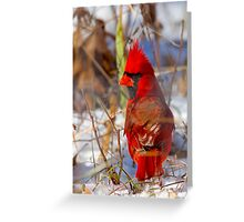 Showing Off My Colors Greeting Card