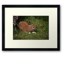 Mongoose Framed Print