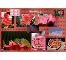 Azalea Collage Photographic Print