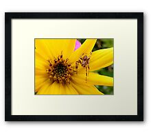 Sunflower and Spider Framed Print