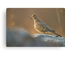 Mourning Dove On Rock Canvas Print