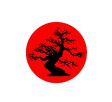 bonsai red sun  Photographic Print