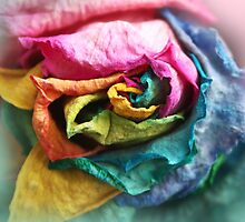 Beautiful Rainbow Rose with Bright Petals by ARTificiaLondon