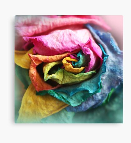 Beautiful Rainbow Rose with Bright Petals Canvas Print