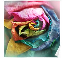Beautiful Rainbow Rose with Bright Petals Poster