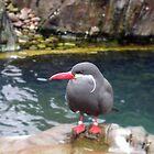 Inca Tern by CreativeEm