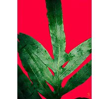Green Fern on Red Pink Photographic Print