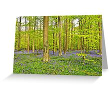 Hallerbos in blue bells blooming period Greeting Card
