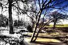 Winter turns to Spring by Nigel Bangert