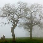 Dancing Oaks In Fog - Central California by Ram Vasudev