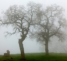 Dancing Oaks In Fog - Central California by Ram Vasudev