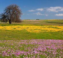 Wildflowers And Oak Tree - Spring In Central California by Ram Vasudev