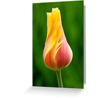 Delicate Folds of a Tulip Greeting Card