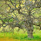 Wildflowers Under Oak Tree - Spring In Central California by Ram Vasudev