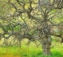 Wildflowers Under Oak Tree - Spring In Central California by Ram Vasudev