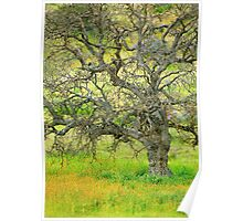 Wildflowers Under Oak Tree - Spring In Central California Poster