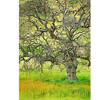 Wildflowers Under Oak Tree - Spring In Central California Photographic Print