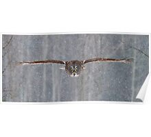 Full speed - Great Grey Owl Poster