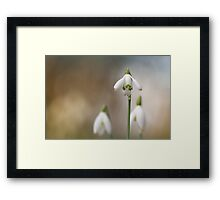 Snowdrops enjoying the light... Framed Print