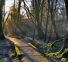 The Old River Path by relayer51