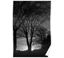 Sun behind the tree Poster