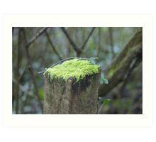 Mossy cap Art Print