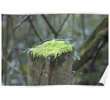 Mossy cap Poster