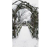Snow Theme - Tree Archway Photographic Print